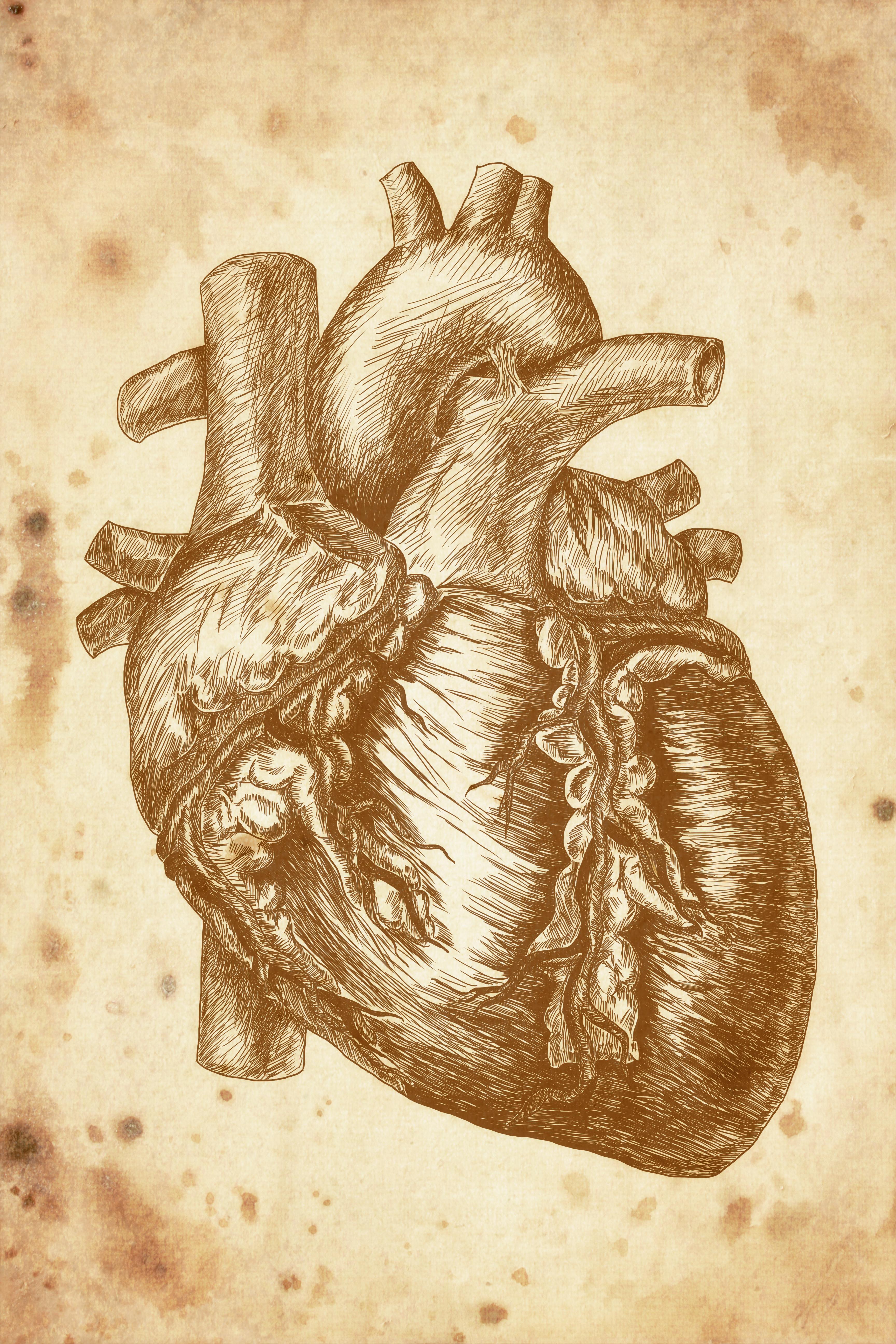 Anatomia serca - fototapeta PIXERS